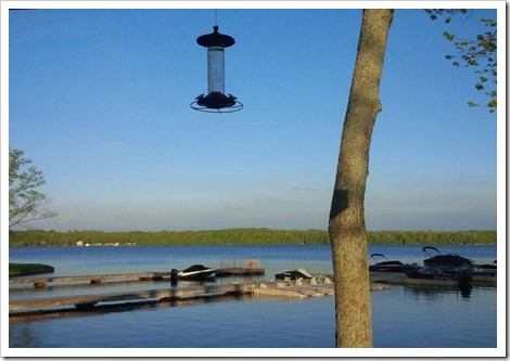 Credit: Parkbridge_Melody Bay_Cindy Deveau_Sept 9 birdfeeder_Summer Cottages